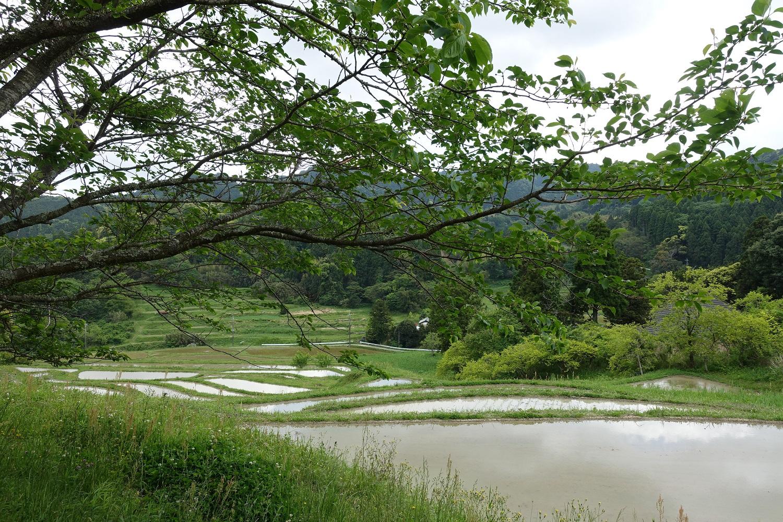 田んぼと里山そしてどこまでも続く空が織りなす景色@東京から一番近い棚田|大山千枚田
