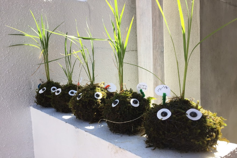 スタイルはさまざま…ただいま お米を栽培中! 〈春~初夏〉